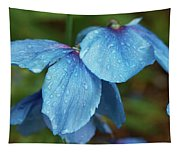 Close-up Of Himalayan Poppy Flowers Tapestry