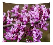 Close-up Of Redbud Tree Blossoms Tapestry