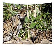Clouded Leopards Tapestry
