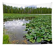 Clouds Among The Lily Pads In Swan Lake In Grand Teton National Park-wyoming  Tapestry
