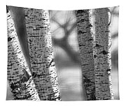 Colorado White Birch Trees In Black And White Tapestry