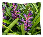Colorful Bromeliad Tapestry