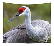 Colorful Sandhill Tapestry