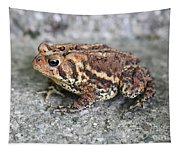 Colorful Toady Tapestry