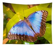 Common Blue Morpho Tapestry