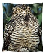 Common Nighthawk Napping Tapestry