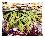 Cornish Rock Pool Snakelocks Anemone Tapestry
