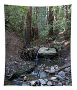 Corte Madera Creek On Mt. Tam In 2008 Tapestry