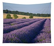 Cotswolds Lavender Tapestry