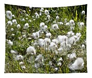 Cotton Grass On Homestead Trail In Homer-ak- Tapestry