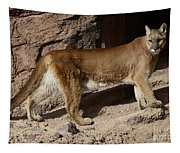 Cougar Aka Mountain Lion Tapestry