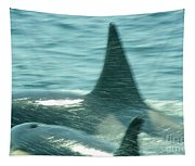 Cow Orca And Her Calf Tapestry