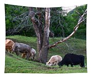 Cows Of Color Tapestry