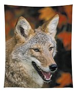 Coyote In Maple Tapestry