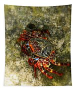 Crab In Cozumel Tapestry by Patti Whitten