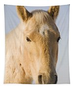 Cream Coloured Horse Head Looking Tapestry