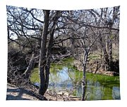 Creek In North Texas Tapestry