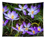 Crocuses Tapestry