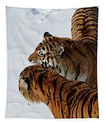Curious Cats Tapestry