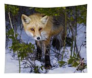 Curious Red Fox Tapestry