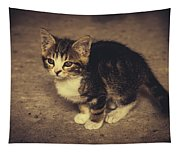Cute Kitten Tapestry