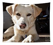 Cute White Dog Tapestry