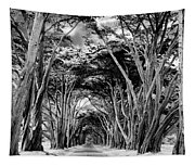 Cypress Tree Tunnel Point Reyes Tapestry