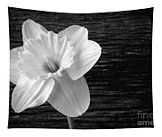 Daffodil Narcissus Flower Black And White Tapestry