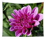 Dahlia Named Blue Bell Tapestry