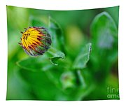 Daisy Bud Ready To Bloom Tapestry