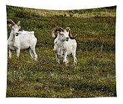 Dall Rams On Alert Tapestry