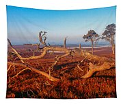 Dead Trees, Southern Uplands Tapestry