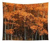 Deciduous Aspen Forest In Fall Tapestry