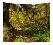 Deep Into The Hoh Rain Forest Tapestry