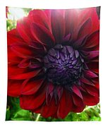Deep Red To Purple Dahlia Flower Tapestry