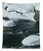 104618-v-deer On The Snow Bank Tapestry