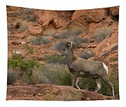 Desert Bighorn Sheep Tapestry