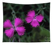 Dianthus Tapestry