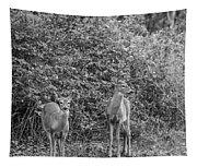 Doe A Deer Bw Tapestry