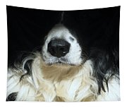 Dog Close Up Tapestry