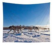Dog Team Pulling Sled Tapestry