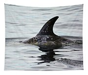 Dolphin In Monterey Tapestry