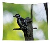 Downy Woodpecker 7448 Tapestry