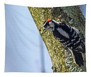 Downy Woodpecker - Male Tapestry