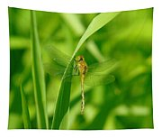Dragonfly On A Grass Stem Tapestry