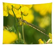 Dragonfly On Birds-foot Trefoil Tapestry