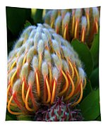 Dramatic Protea Flower Tapestry