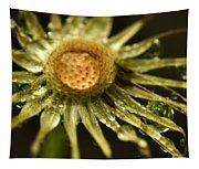 Dried Dandelion After Rain Tapestry