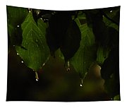 Dripping From The Green Tapestry
