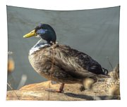 Duck By Pond Tapestry